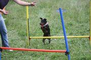 Online Hunde Training (