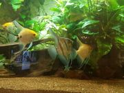 450lt juwel Aquarium mit Inhalt