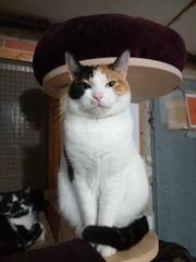 Katze Annie sucht ein liebevolles