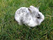 verschiedene ältere Kaninchen