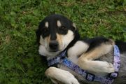 Fröhlicher, lieber Hundebub