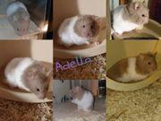 Adella ein Hamster sucht artgerechtes