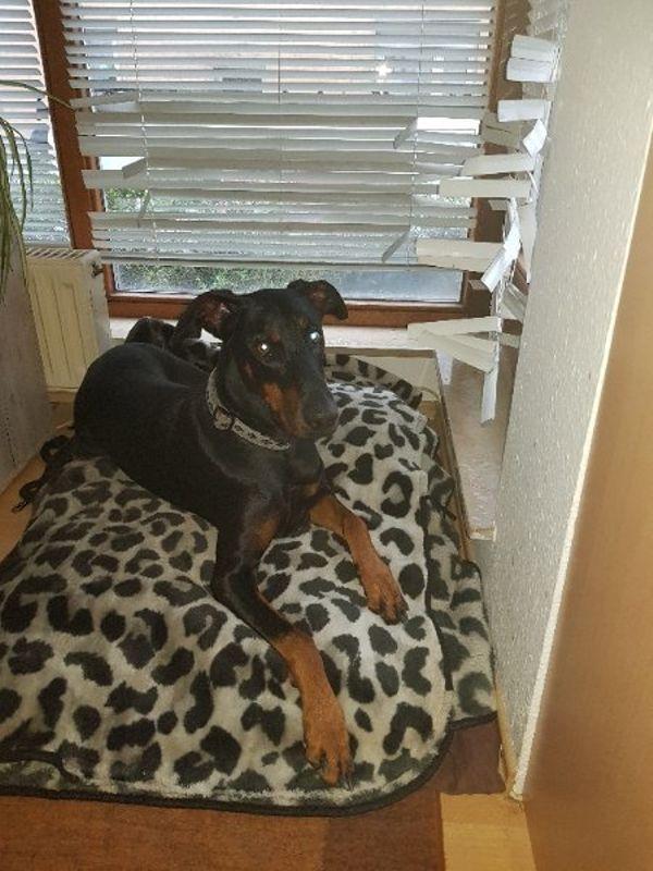 suche neues Zuhause » Hunde