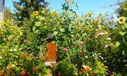 Garten in Bogenhausen