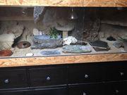 Terrarium m Leopardgeckos