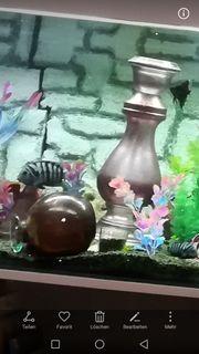 Verkaufe Aquarium 150cm