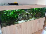 Aquarium 720 Liter,