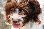 GESUCHT Hundebeteiligung/ Zweitfamilie/