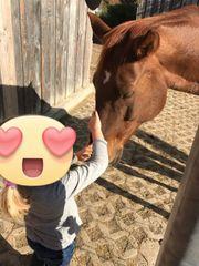 Verschenke Zeit mit meinem Pferd