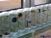 Pflege von Aquarien