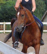 Pferde aus professionelle