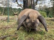Alan muss ausziehen Kaninchen zwerg