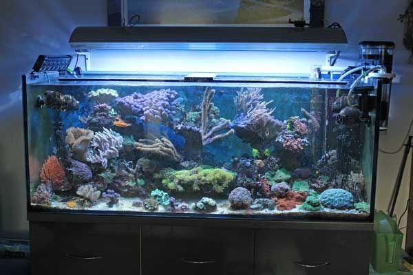 Komplettes Meerwasser Aquarium zu verkaufen