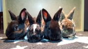 Süße Kaninchen Babys -