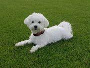 Hundebetreuung für kleine Rassen