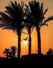 Urlaub in Ägypten 3 Wochen