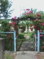 Kleingarten in schöner