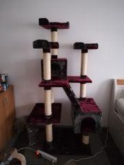 Katzen Kratzbaum wie