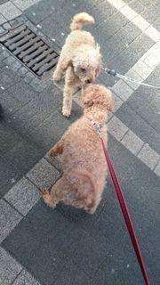 Hunde Abwesenheitsbetreuung