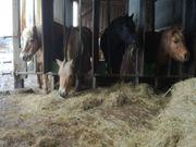Verschiedene Ponys