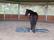 Bodenarbeit mit Pferden (