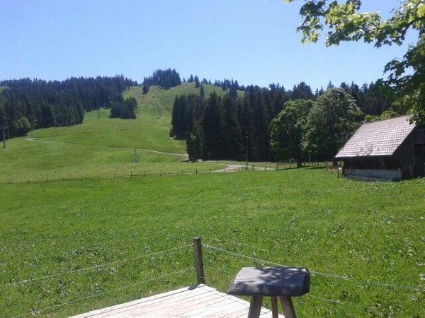 Baumischgebiet Bauplatz in Lochau gesucht