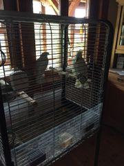 Kakadu mit Käfig