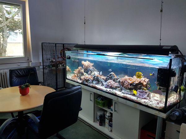 meerwasseraquarium 750l gebraucht zu verkaufen in stuttgart fische aquaristik kaufen und. Black Bedroom Furniture Sets. Home Design Ideas