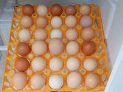 Eiermix von unseren glücklichen Hühnern