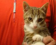 Wunderschöne Rasse Mix Kitten Katzenbabys