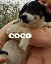Coco sucht dringend