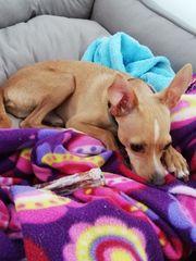 Familiäre Hundebetreuung für KLEINE Hunde
