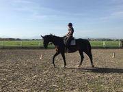 Pferdebesitzer aufgepasst RB gesucht