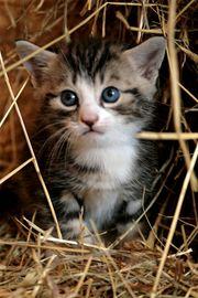 Katze baby