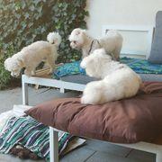 Hundepension für kleine Rassen