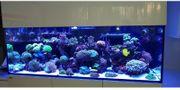 Korallen Meerwasser SPS Zoas Weichkorallen
