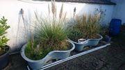Kübel mit Pflanzen