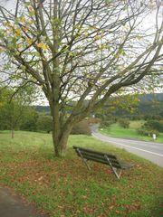 Schönes Wiesengrundstück im Westerwald
