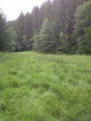 Weiden, Wiesen, Grünland,