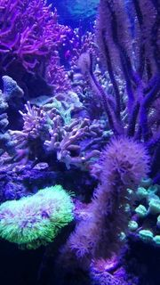 Meerwasserpflanzen