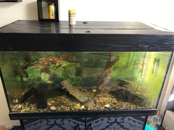 kaputtes aquarium kleinanzeigen kaufen verkaufen bei deinetierwelt. Black Bedroom Furniture Sets. Home Design Ideas