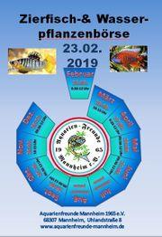 Fischbörse 23 02 2019 Aquarienfreunde