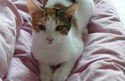 Foula schüchternes Katzenmädchen ca 5