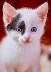 Ich suche eine Babykatze weiblich