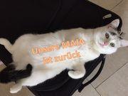 weiße Katze Maja in Emmering
