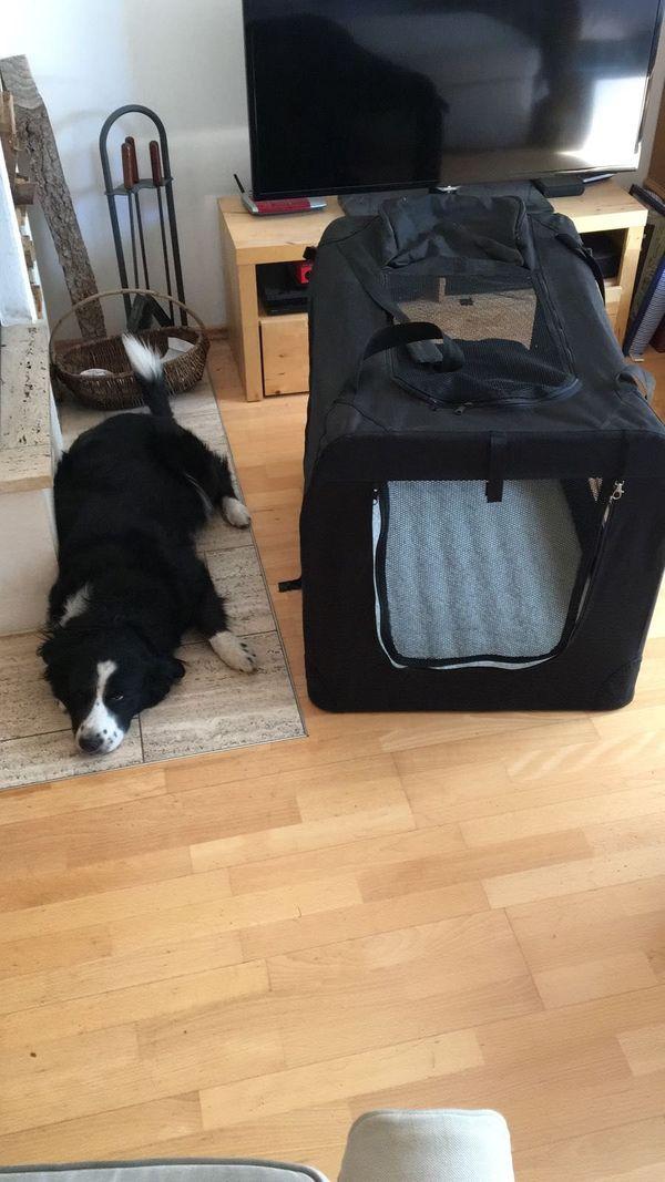 Hundebox für großen Hund - wie neu in Neubiberg - Zubehör für ...