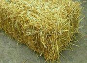 Stroh, Weizenstroh trocken,
