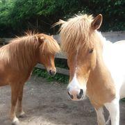 Pferdebegeisterte Reitermädls gesucht