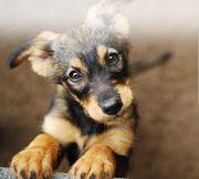 Wir suchen Sachspenden für Hunde