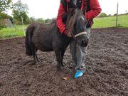 mini Pony 80cm